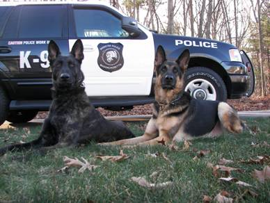 K-9 Radar and Red sitting in front of patrol car